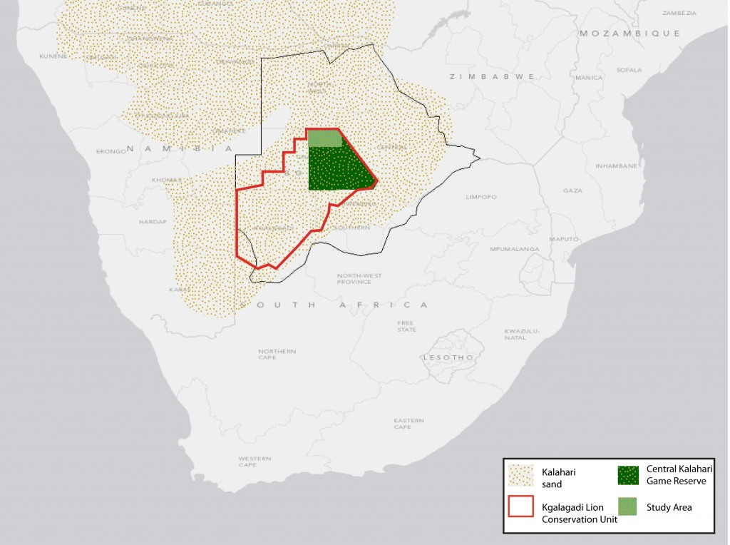 The Kalahari sands (beige), Botswana (Black line), the Kalahari Lion Conservation Unit (red line), the CKGR (Dark green area) and the study are for this project (light green area).