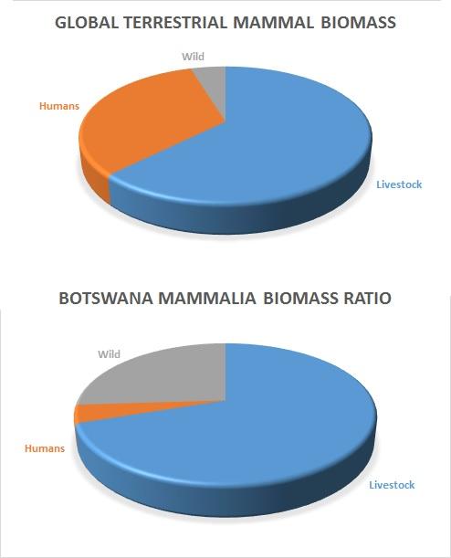 TerrestrialBiomassRatios